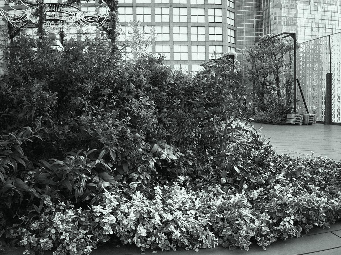 Black & White 作例画像03